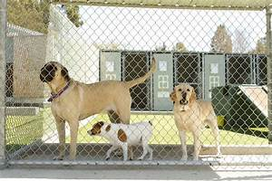 Pros and cons dog boarding kennels vs in home boarding for Boarding your dog