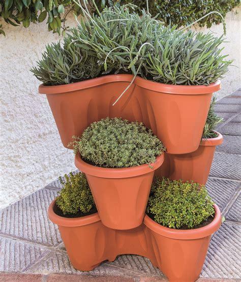 piante da frutto in vaso 8 piante da frutto perfette per la coltivazione in vaso