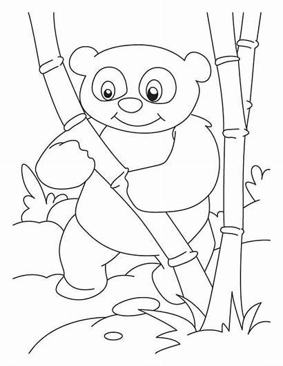 Panda Coloring Pages Bamboo Anime Pandas Printable