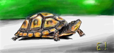 colors of the turtles turtle in graffiti application by