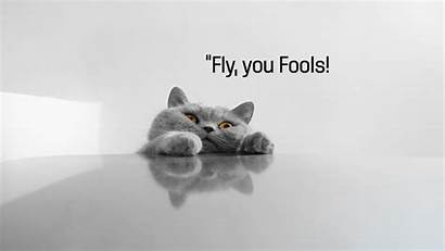 Meme Funny Cat Quote Grumpy Humor