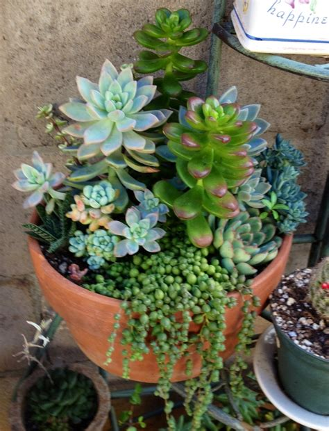 succulents containers cactus container garden www imgkid com the image kid has it