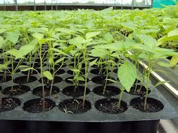 การขยายพันธุ์พืช