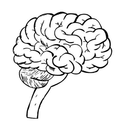 Hersenen Kleurplaat by Lichaam Kleurplaten Hersenen