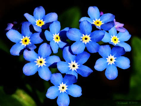 forget me nots forget me not touching the king