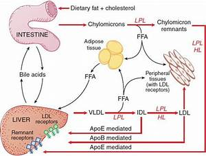 Drug Therapy For Hypercholesterolemia And Dyslipidemia