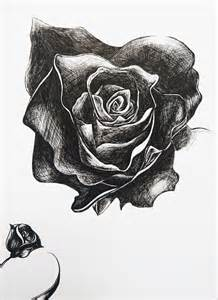 Pen and Ink Drawings Rose