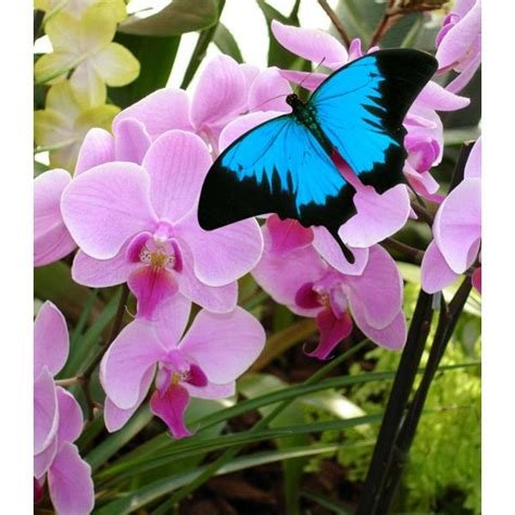 cuisine d expo pas cher le jardin des papillons le 28 images jardins des