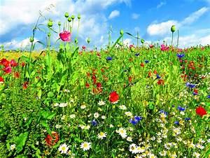 Quand Semer Du Gazon : semer une prairie fleurie quand et comment ~ Dailycaller-alerts.com Idées de Décoration
