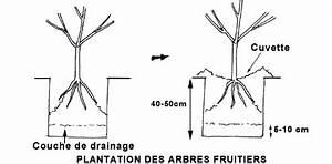 Quand Planter Un Pommier : planter les arbres fruitiers gamm vert ~ Dallasstarsshop.com Idées de Décoration