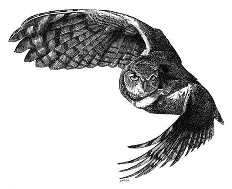 flying barn owl drawing flying owl drawing by woyak