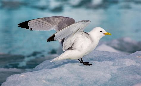 Seabirds In Danger In Updated Red List Geographical