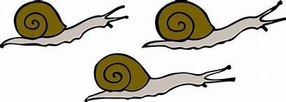Snails Clip Clipart Snail Svg Sea Slug