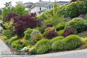 best shrubs for small gardens 1203498 grasses shrubs small trees in front yard garden next to sidewalk acer palmatum cv