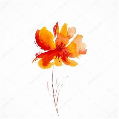 Watercolor Flower Orange Floral Illustration Background Blossom