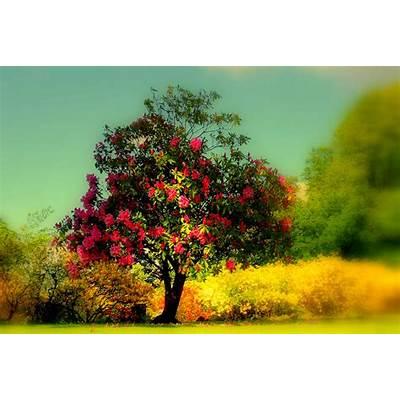 beautiful tree - Google pretragaWe Heart It