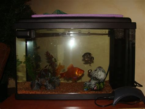 lancement d un premier aquarium forum poisson