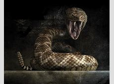 Cobra Snake Wallpaper High Resolution