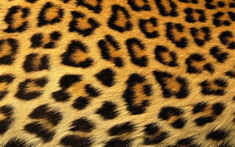 Animal Print Wallpapers For Android - 1080p hd animal print wallpaper high quality desktop