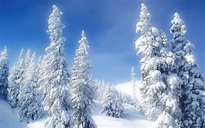 Winter Snow Landscape Trees Wallpapers Pretty Desktop
