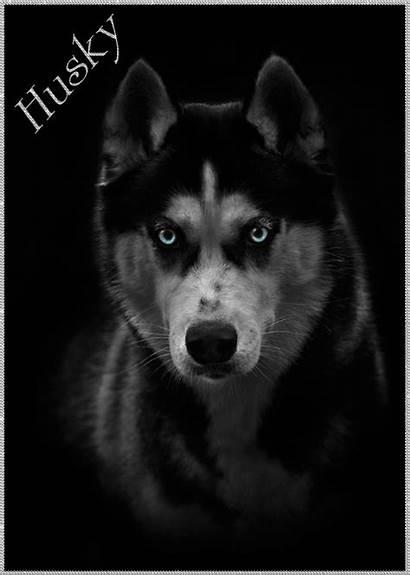 Husky Alaskan Siberian Gifs Dog Puppy Wolf