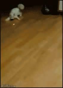 laser light for cats cat chasing laser pen gif