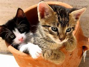 so cute cat images and photos