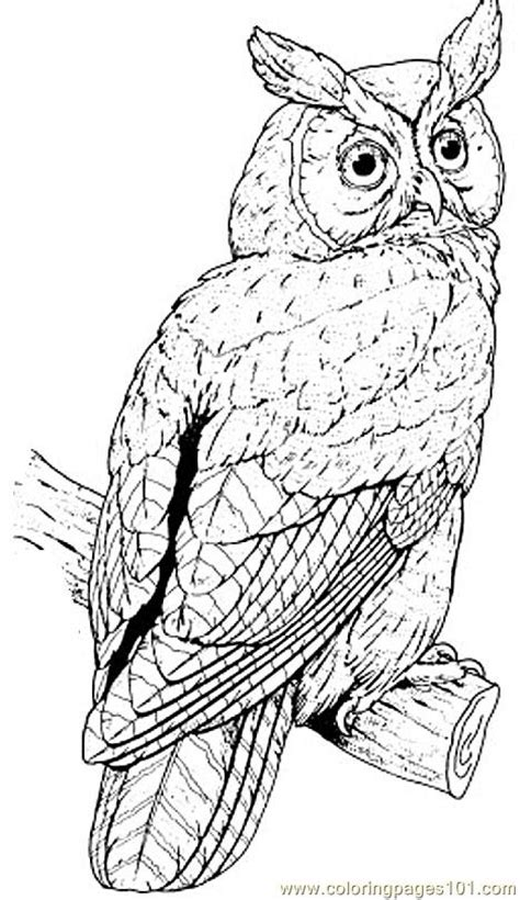 great horned owl coloring page  owl coloring pages