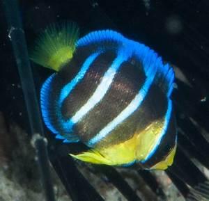 Fishes of Flower Garden Banks National Marine Sanctuary ...