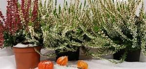 Plantes D Hiver Extérieur Balcon : plante d hiver balcon pivoine etc ~ Nature-et-papiers.com Idées de Décoration