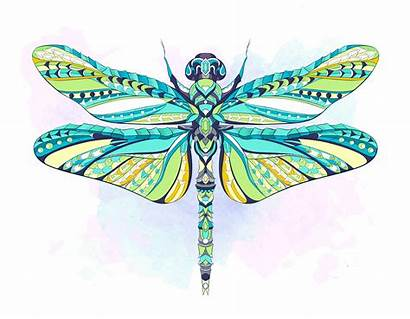 Dragonfly Colorful Background Dragonflies Tattoo Illustration Vector