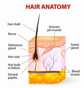 Why hair mask makes your hair silky and shiny? - Life with ...
