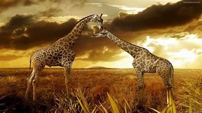 Desktop Nature Wallpapers African Backgrounds Background Widescreen