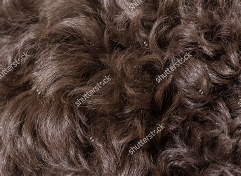 hair textures patterns backgrounds design trends