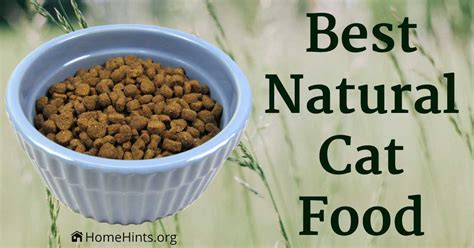 what is the best cat food best natural cat food healthiest dry wet brands