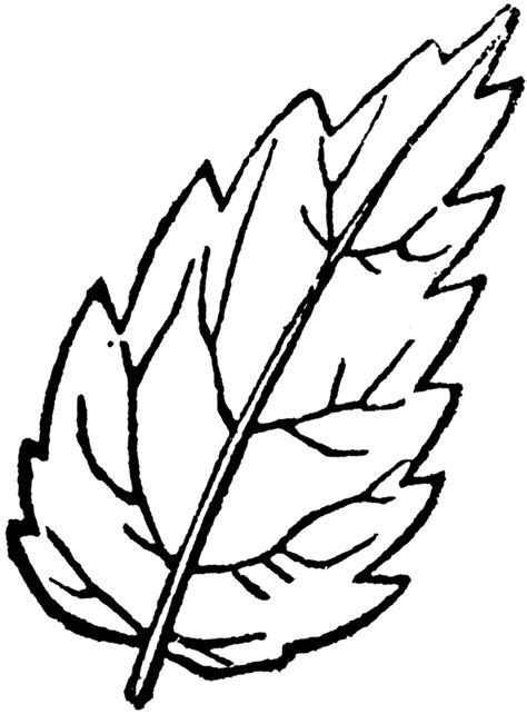 leaf outline clipart gclipartcom