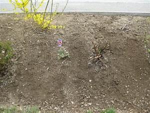 Böschung Bepflanzen Fotos : b schung bepflanzen eigene ehre retten page 4 mein sch ner garten forum ~ Orissabook.com Haus und Dekorationen