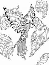 Paradise Coloring Bird Pages Adult Mandala Printable Dover Sheets Doverpublications Drawing Colouring Birds Books Getcolorings Publications Mandalas Phoenix Template Flower sketch template