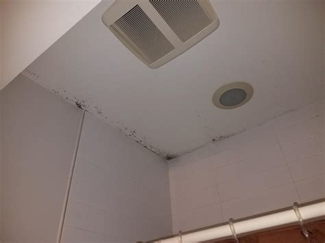 Mold Removal Clean Up Company In Toms River Woodbridge