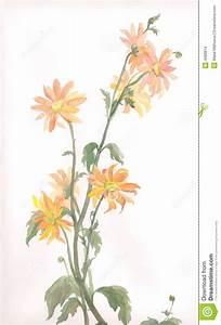 Orange Chrysanthemum Flower Watercolor Drawing Stock ...
