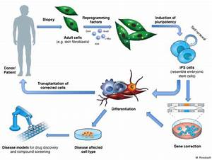 iPS cells and reprogramming: turn any cell of the body ...