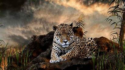 Leopard Wallpapers 1080p Wild Animal Desktop Backgrounds