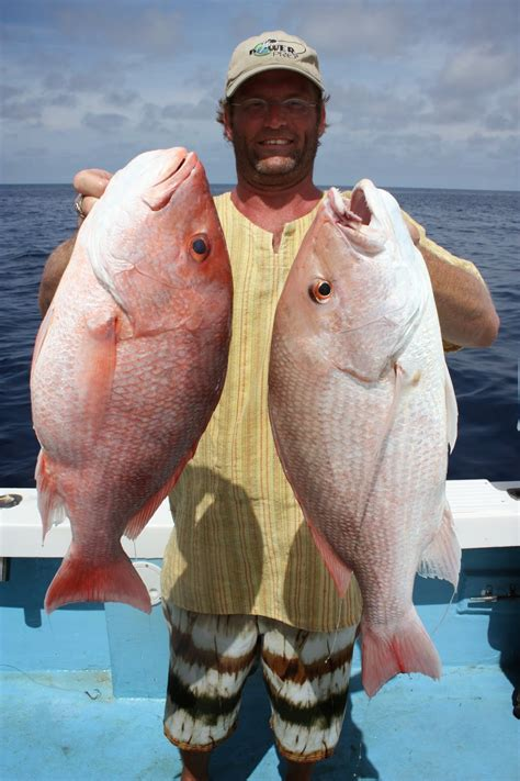 fish snappers larry