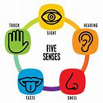 Senses Five Clipart Project Sense Transparent Health