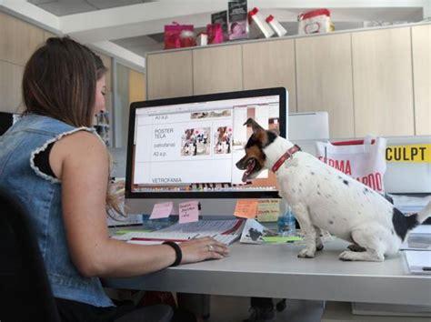 Lavora Con Noi Ufficio Sta - i nostri amici a quattro ze in ufficio con noi