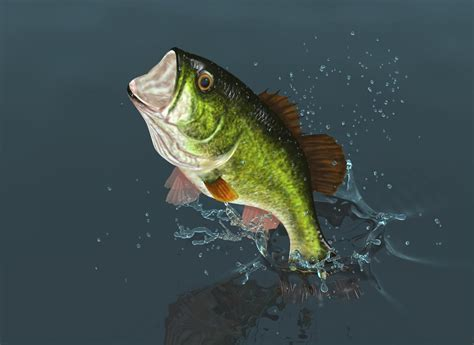 largemouth bass facts