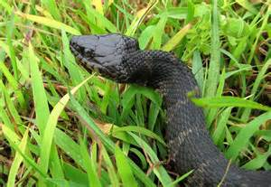 African South Africa Snakes