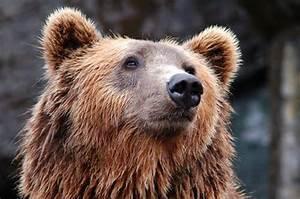 200  Incredible Bear Pictures  U00b7 Pexels  U00b7 Free Stock Photos
