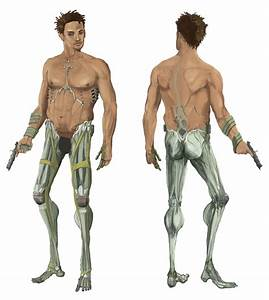 Back Muscular System