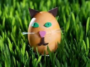 cat egg how to make easter egg animals pawnation